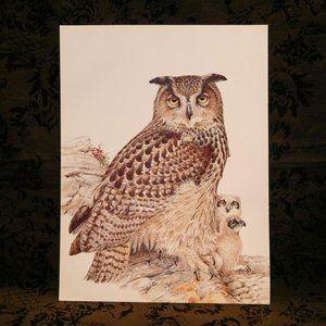 VTG 1981 Owl w/ Baby Owlets Wildlife Print DDL173